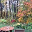 庭の木々色づく