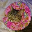 パラボラ猫