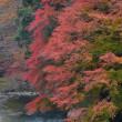 「秋の渓流!」 いわき 夏井川渓谷にて撮影! 楓の紅葉