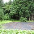 8月16日(水)・小雨の中