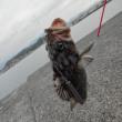 防波堤で釣り ソイ2匹