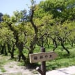 市の公園には、梅の実