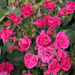 庭の花達*
