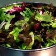 いろいろ葉っぱのサラダ