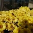 蜜蜂みつけた