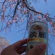 3/28~31宮崎県の旅