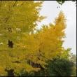 真如堂(真正極楽寺) 「京都」の紅葉