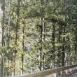 トラウマの釜ゆでと、美しい白糸の釜。三ッ釜ノ滝。