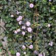 コバノランタナ 小葉の Lantana