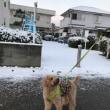 また雪が!