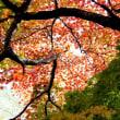 降り注ぐ秋、小さい秋