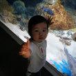栃木県から長男の娘 私達の孫芽衣ちゃんが遊びに来てくれました!!
