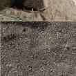 18年10月10日 タマネギの植え方