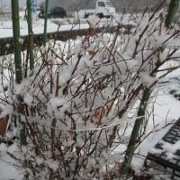 厳寒の冬に。。。