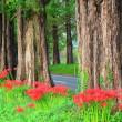 メタセコイヤ並木の彼岸花