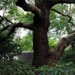 木々に魅せられて・・・