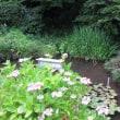水の都…、水戸の湧水を訪ねて ①