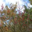 植物観察会:三重県立上野森林公園 2017年11月12日(日)