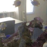 魚の産卵と水槽レンタル