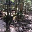 今日の登山道