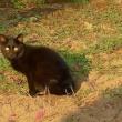 「街の無意識」NO.4 黒猫