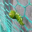 アゲハチョウの幼虫、こんなところに