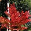 『今年の紅葉』