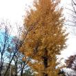 秋も終わり。。。