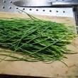 今日の収穫「細ネギ」
