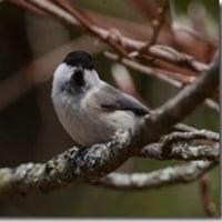鳥撮りデータ58(2013.4ー1)