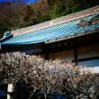 『1月の梅』 蓮花院