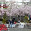 桜コスプレ その1
