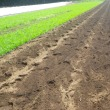 里芋植え付け、インゲンにフラワーにネット