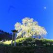 高畠町峰岸桜ライトアップ