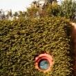 今日の井の頭公園ジブリ美術館
