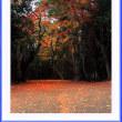 小径の紅葉