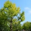 昭和記念公園(コスモス)