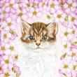 途中経過4 (桜と子猫)