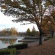 秋・夕刻の落合公園