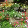 家の庭や玄関前の百合が次々と咲き楽しみの毎日です!