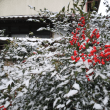 昨日から雪
