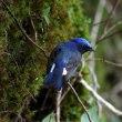 新緑と鳥と清流