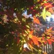 11月15日 上会津屋の紅葉情報