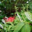 草花の小さな世界(赤塚植物園)