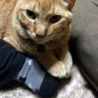猫の手ブロック、炸裂!