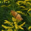 2018/10/14 紀伊上臈杜鵑が咲く