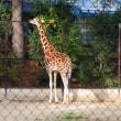 岡山の池田動物園存続の危機なんだって!