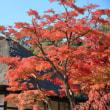 2017鎌倉モミジ巡り