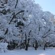 冬の兼六園 ①