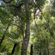 囲碁と世界遺産ブルーマウンテンズ国立公園シーニックワールド眺望(5日目午前)